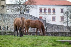 Horses, Animals, Beautiful, Animales, Animaux, Animal, Animais, Horse