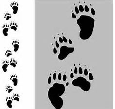 Image result for picture of polar bear tracks