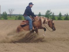 Fletcher's Horse World, Ontario's Premier Reining Horse Boarding  Training Facility