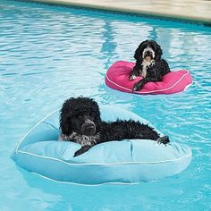 Want it for our hot dogs in the summer... Products Pet Accessories - page 13