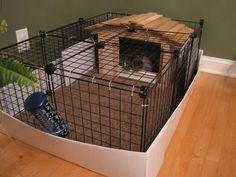 a bunny home?