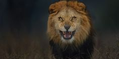 Photographer Gets A Little Too Close To Lion, Escapes With This Stunning Picture