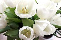 #tulips #gardening
