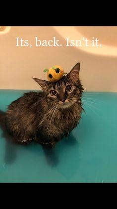 692c3ad6b0 482 Best Cats ~ Wet Cats (Våte Katter) images in 2019
