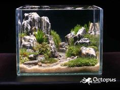 Beautiful aquascape bringing a desert canyon under the water.