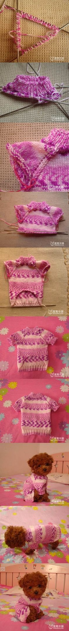 DIY Knitted Dog Sweater 2