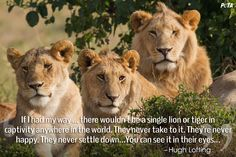 9 Quotes That Will Change What You Think About Zoos