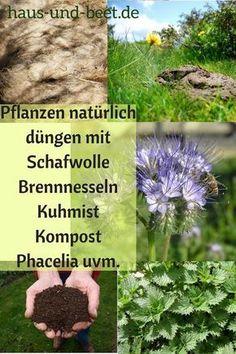 Gemüsebeet Plants fertilize with biological aids. Fertilizing plants is especially important if you Fertilizer For Plants, Plants, Garden, Fertilizer, Planters, Flowers, Easy Garden, Growing Flowers, Gardening Tips