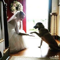 Amigo estou aqui!   #precasamento #sitedecasamento #bride #groom #wedding #instawedding #engaged #love #casamento #noiva #noivo #noivos #luademel #noivado #casamentotop #vestidodenoiva #penteadodenoiva #madrinhadecasamento #pedidodecasamento #chadelingerie #chadecozinha #aneldenoivado #bridestyle #eudissesim #festadecasamento #voucasar #padrinhos #bridezilla #casamento2016 #casamento2017