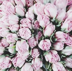 can you tell im obsessed with peonies? May Flowers, Flowers Nature, Fresh Flowers, Beautiful Flowers, Plants Are Friends, No Rain, Motif Floral, Planting Flowers, Flower Arrangements