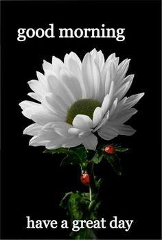 Good morning to you beautiful! Gud Morning Wishes, Good Morning Wednesday, Good Morning My Love, Morning Morning, Morning Greetings Quotes, Happy Morning, Morning Blessings, Good Morning Picture, Good Morning Flowers