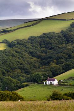 Devon, UK (by Michelle Cardwell)