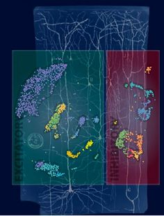 New technique identifies previously unknown human neuron subtypes.