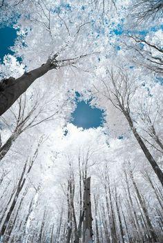 Azul y Blanco! Que belleza!