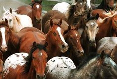 Critics have launched a campaign against the federal government's plan to reduce a herd of wild horses in the mountains of Eastern Oregon.