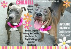 Rip sweet chanell :(