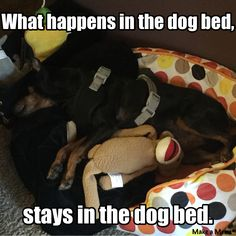"""Lucy loves her sock monkey, but we're worried she """"loves"""" her sock monkey. JK"""