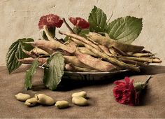Still Life with Beans after Giovanna Garzoni (by Kevin Best)