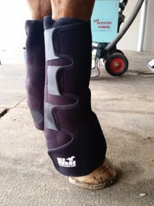 Why you should be icing your horse after exercise!   http://www.proequinegrooms.com/index.php/tips/grooming/the-case-for-icing-your-horse-s-legs-after-exercise/