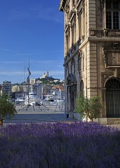 Lavender Comes To Marseille