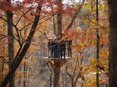 Zipline In The Fall In Georgia! Too Beautiful, And In My Backyard