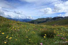 PRALI (TO) - Gran Guglia e Lago Verde - Passeggiata del 9 Agosto 2013 Partenza da Bout du Col - Fioritura in altura - Val Chisone #torino #jardin #garden #fleurs #montagne #italy #roure #roreto