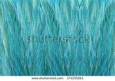 guinea fowl feathers  by Nazarenko Andrii, via Shutterstock