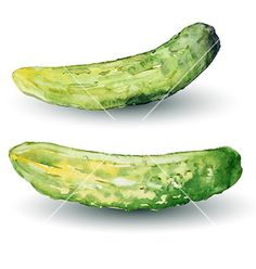 Cucumber watercolor vector 4488473 - by Insh1na on VectorStock®
