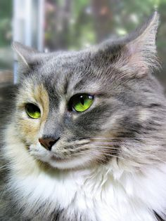 "a-sensual-happy-moody-moon: "" magical-meow: "" Ms. Squeaky by Trish Hamme Happy Whisker Wednesday :) http://flic.kr/p/of8Brs "" """