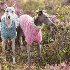 Wonderful Whippet Rib & Stripe Knitting Kit - two lovely styles that will fit your shapely hound just right.  www.redhoundfordogs.com