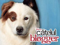 Catelul blogger