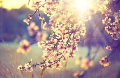 Beautiful nature scene with blooming tree Royalty Free Stock Image
