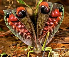 ":Eyes"" on its wings to scare off predators."