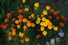 Kauniit kukat!