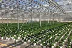 Rough Brothers offers wide range of high quality commercial grower equipment for your greenhouse business.