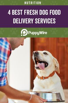 Don't have much time? Feeding your dog using a fresh dog food delivery service can help! Check out our top 4 picks for this year. Dog Food Delivery, Meal Delivery Service, Food Service, Turkey Recipes, Pork Recipes, Dog Food Recipes, Dog Weight, Your Dog, Fresh
