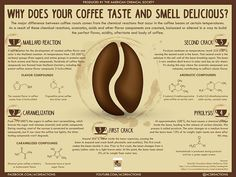 taste and smell of coffee explained