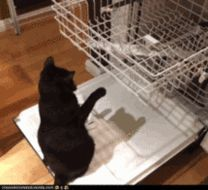Cats Who Clean - Cleaning and Organizing Fun - Good Housekeeping