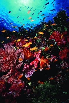Tropical island paradise | Fiji reef | #OrganicSpaMagazine