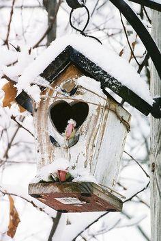 Hiver - neige -m For the birds I Love Winter, Winter Time, Love Birds, Beautiful Birds, Beautiful Hearts, Bird Cages, Winter Scenes, Winter Garden, Bird Feathers