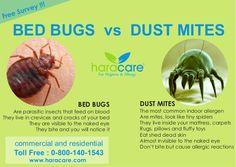dust mite bites allergy relief for clayton pinterest dust mites dust mite allergy and bugs. Black Bedroom Furniture Sets. Home Design Ideas