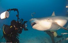 A Bull shark faces up to Gerardo del Villar as he and another diver explore the waters off Mexico