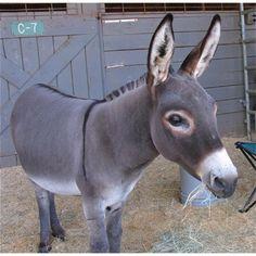 Donkey!!