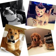 Four of our PAW-PARAZZI featured on our blog: http://www.apartmentsatcitycenter.com/news/apartments-citycenter-pet-friendly/