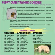 Most current Photo Free printable puppy crate training schedule! The best solution to potty train y. Ideas How Are Pets Given Fundamental Obedience Training ? Puppy Potty Training Tips, Training Your Dog, Kennel Training A Puppy, Training Collar, Puppy Crate Training Schedule, Labrador Puppy Training, Training Plan, Crate Training Puppies, House Training A Puppy