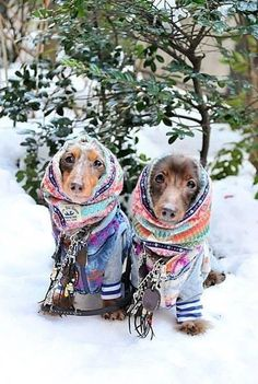 16 Pups Who Are Dachshund Through the Snow Derpy doxies find thrills and chills as they frolic through the snow.