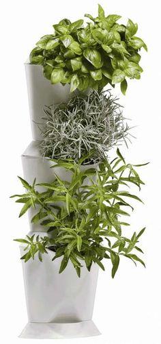 dobromysl (oregano) máta pěstování vertikální zahrada květiny byliny květináč truhlíky zelenina Korn, Houseplants, Planters, Herbs, Garden, Green Walls, Reading, Books, Garten