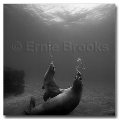 Purchase Prints from Ernie Brooks