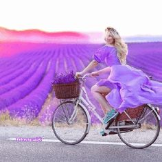 Lavender, fields - A beautiful ride cycle in front of beautiful fields 😍😍😍 Purple Love, All Things Purple, Shades Of Purple, Pink Purple, Bicycle Girl, Lavender Fields, Lavender Cottage, Beautiful World, Beautiful Pictures