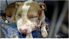 Please sign: SEVERELY MISTREATED PIT BULL IS EUTHANIZED BY SHELTER DESPITE HAVING RESCUE ASSURED! > http://www.yousignanimals.org/Severely-mistreated-pit-bull-is-EUTHANIZED-by-shelter-despite-having-RESCUE-assured-Act-Now-t-5225